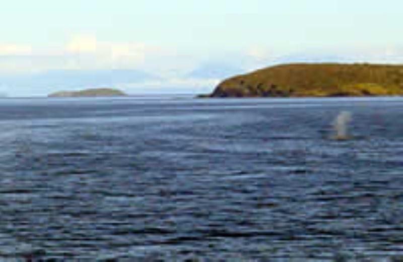 Canales Patagonicos - Ruta Sur (Puerto Montt - Puerto Natales)