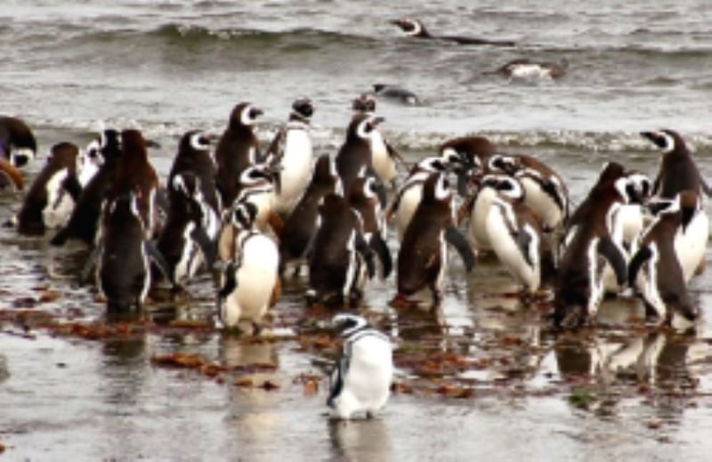 """Seno Otway"" Penguin Burrows"