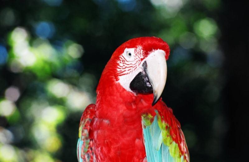 Parques De Las Aves