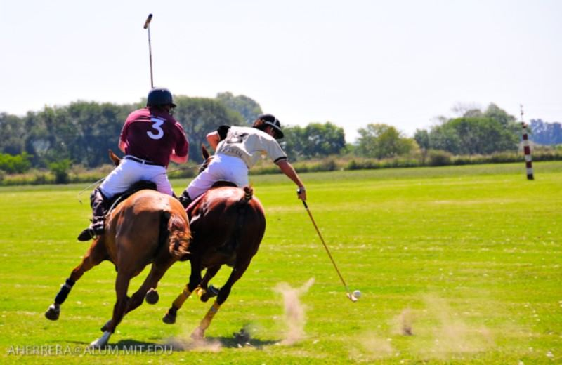 Día De Polo Em Argentina