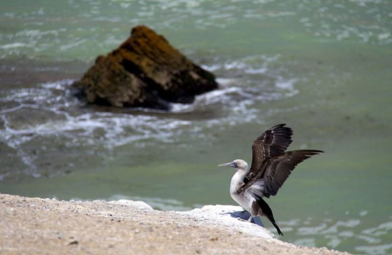 Extension To Paracas Reserve And Ballestas Islands