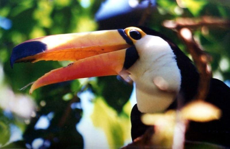 Sendero Ecologico Bananeira