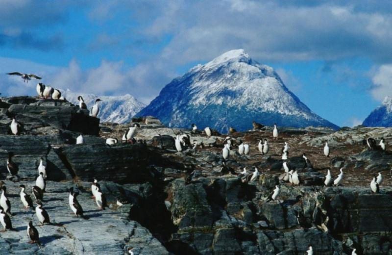 Navegación Hacia La Pinguinera