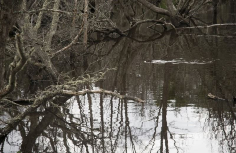 MEETING WITH BEAVERS AND EMERLAD LAGOON