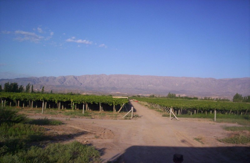 Viñedos Y Bodegas - Ruta Del Vino