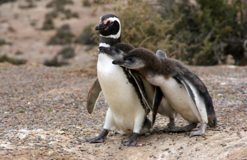 PUNTA TOMBO WITH PINGUINOS AND TONINES WARNING