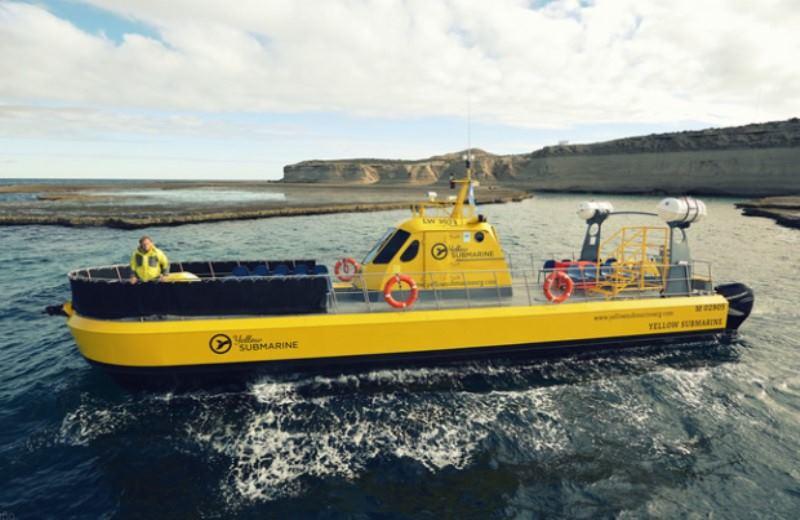 Avistaje Submarino De Ballenas