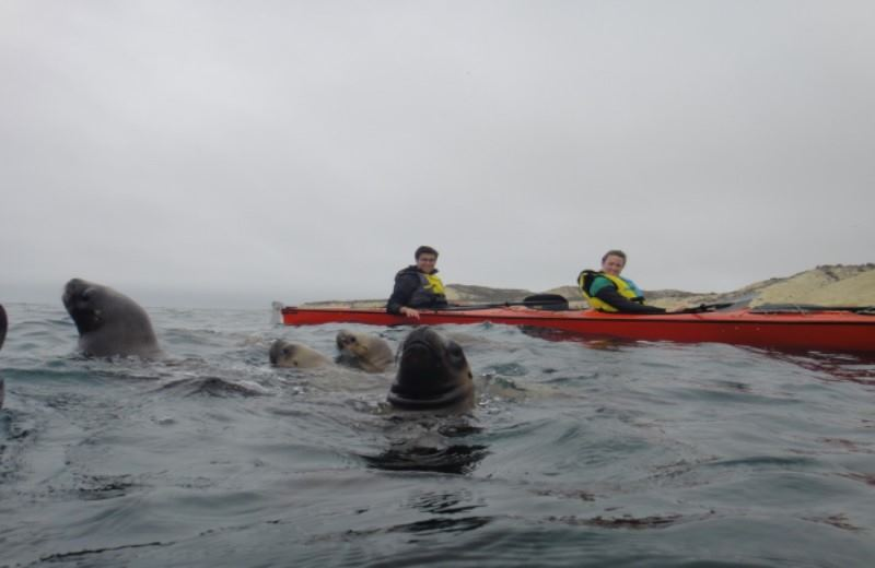 Kayaking With Sea Lions
