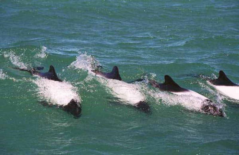 Pinguinos E Golfinhos Em Punta Tombo