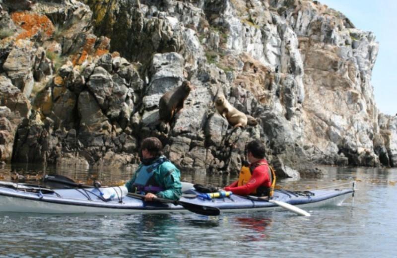 Kayak En La Isla De Gable