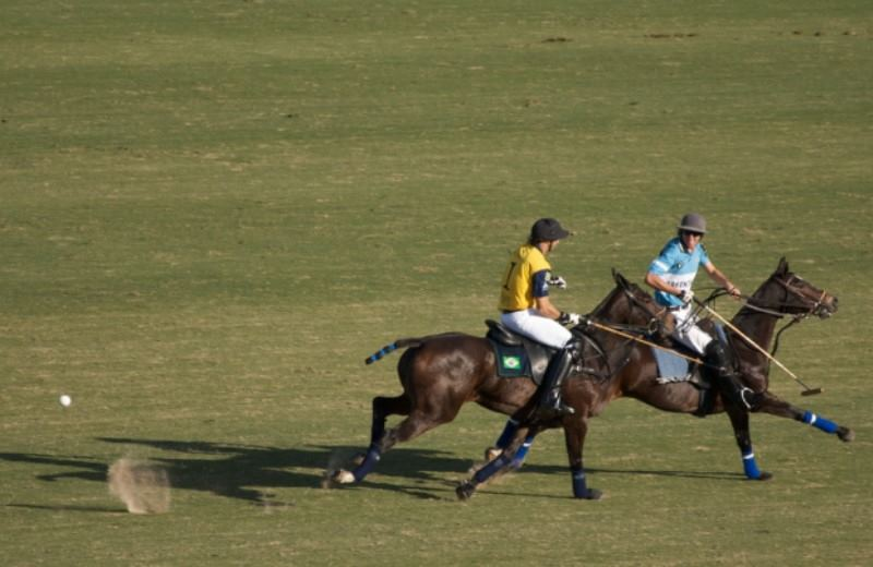 Tours And Tickets For Polo Games In Argentina