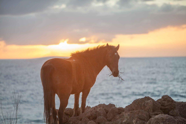 HORSEBACK ON EASTER ISLAND