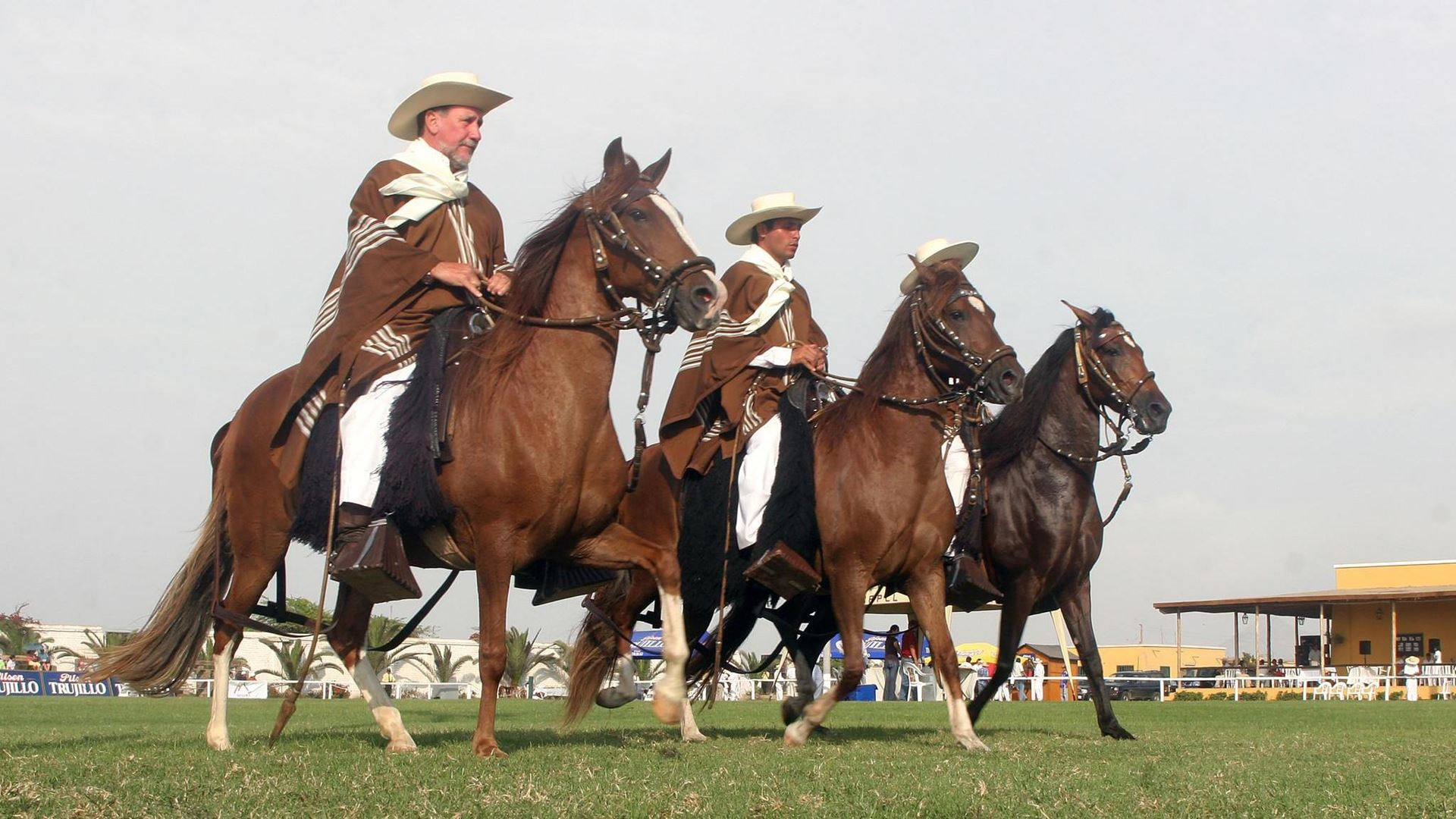 Peruvian Paso Horse & Marinera + Lunch