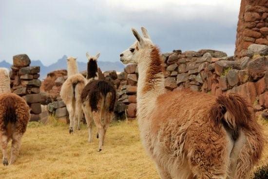Caminata Al Maravilloso Huchuy Qosqo - 3 Dias