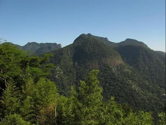 Jeep Tour Corcovado With Tijuca Rain Forest And Santa Teresa