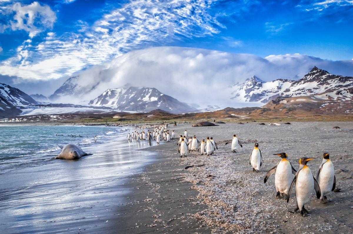 Celebrity Eclipse Cruise: Argentina, Chile & Antarctic Peninsula