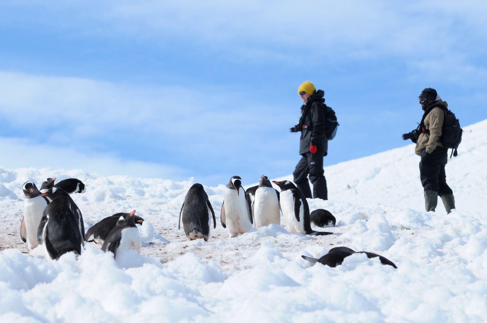 Peninsula Antartica E Islas Shetlands Del Sur