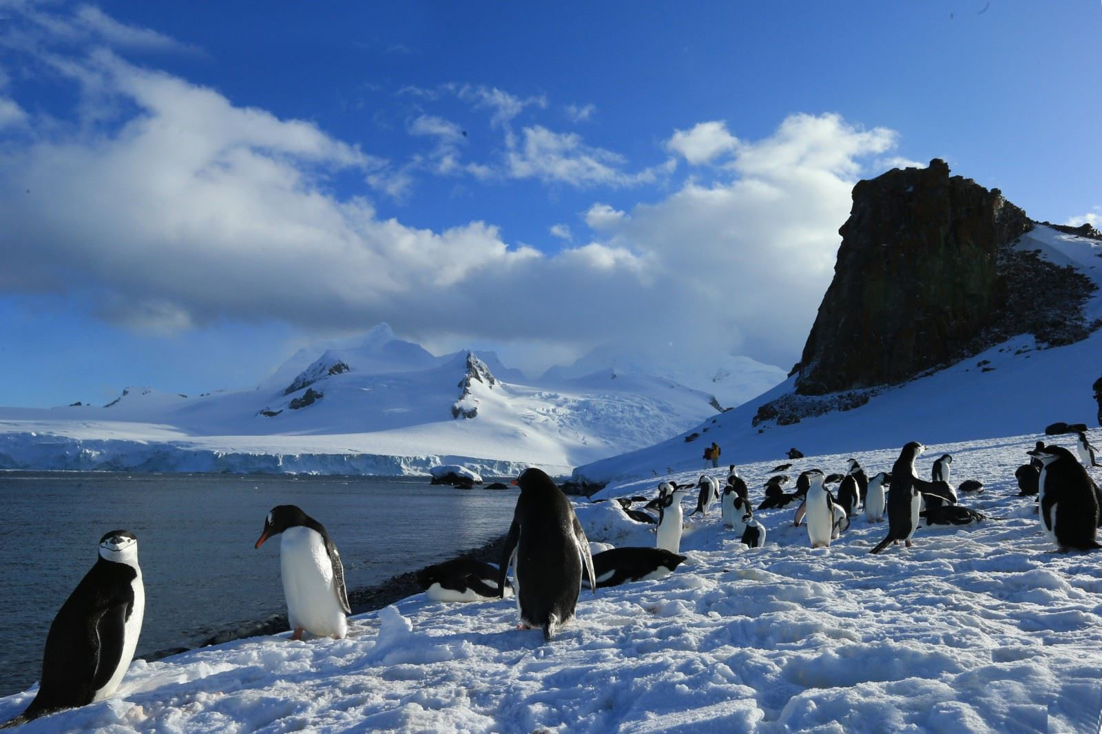 Weddell Sea Cruise including helicopters
