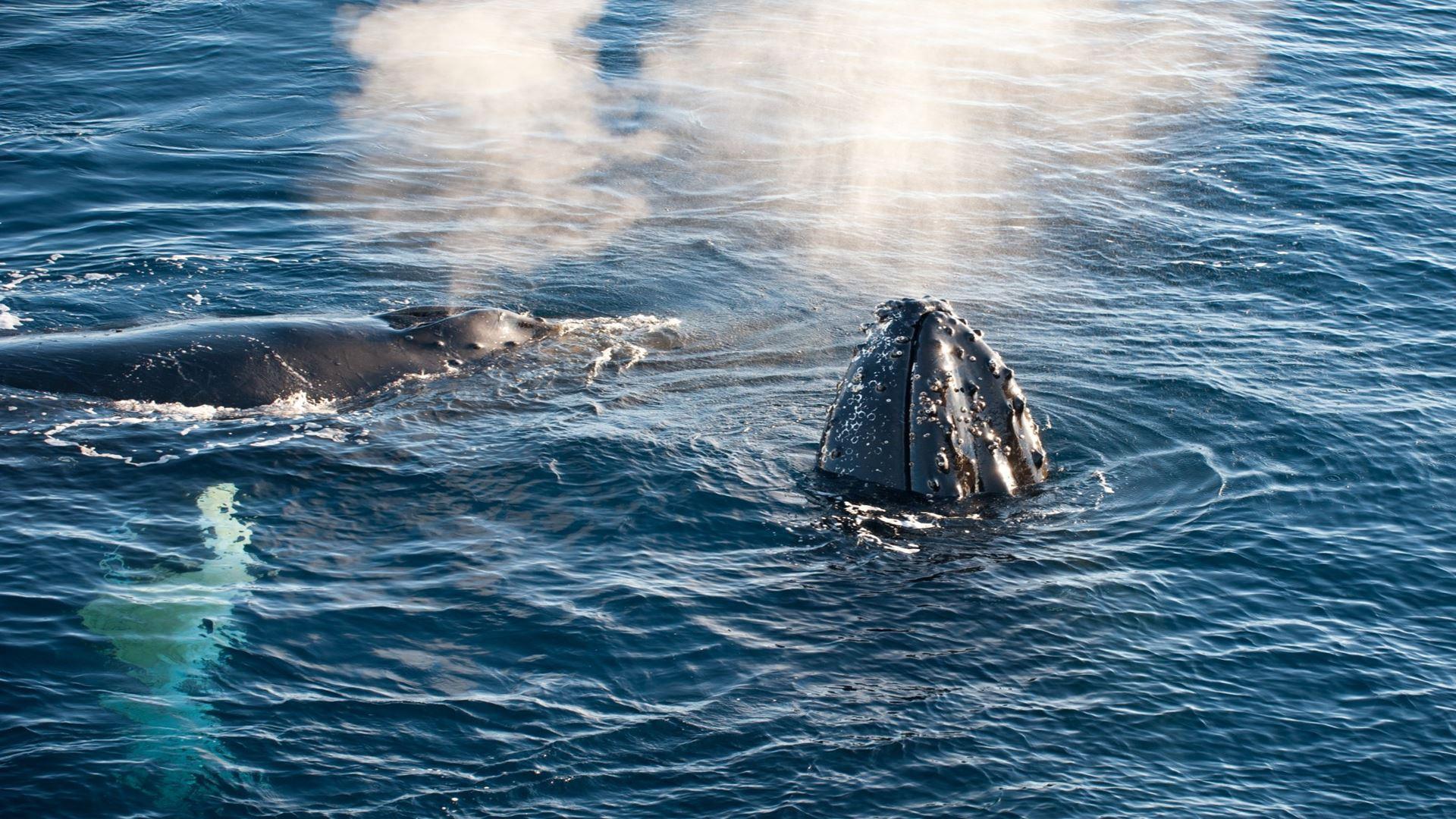 Cruzeiro Pela Peninsula Antartica E Avistamiento De Baleias