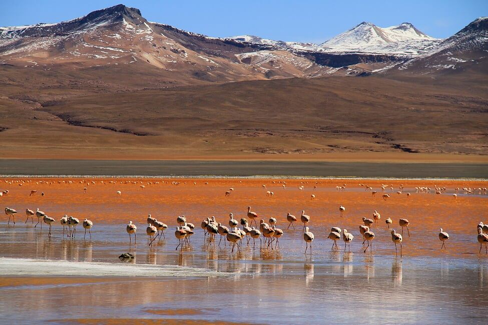 From Villazón To The Salt Flats Of Uyuni & Lagoons - 5 Days