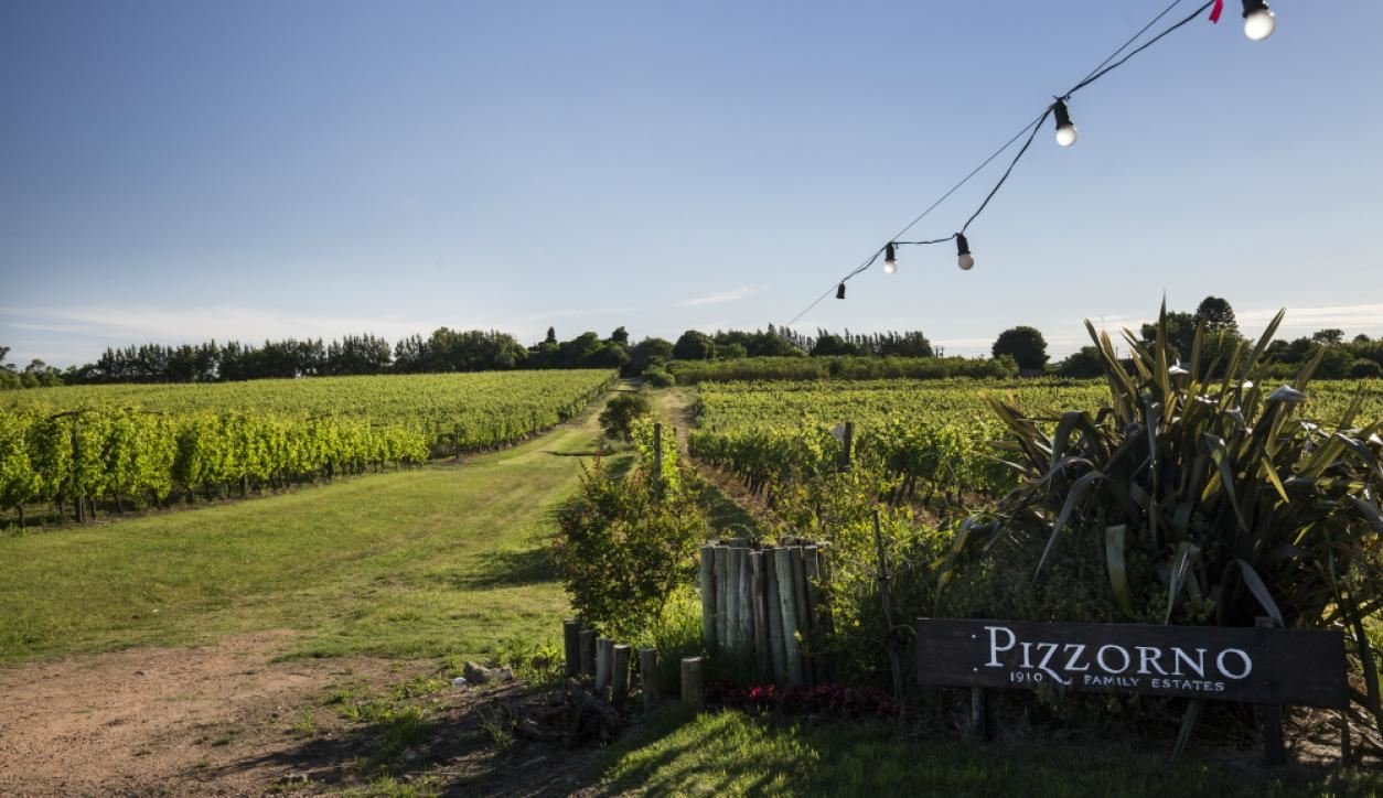 Wine Tasting and Tour to Pizzorno Vineyards & Winery