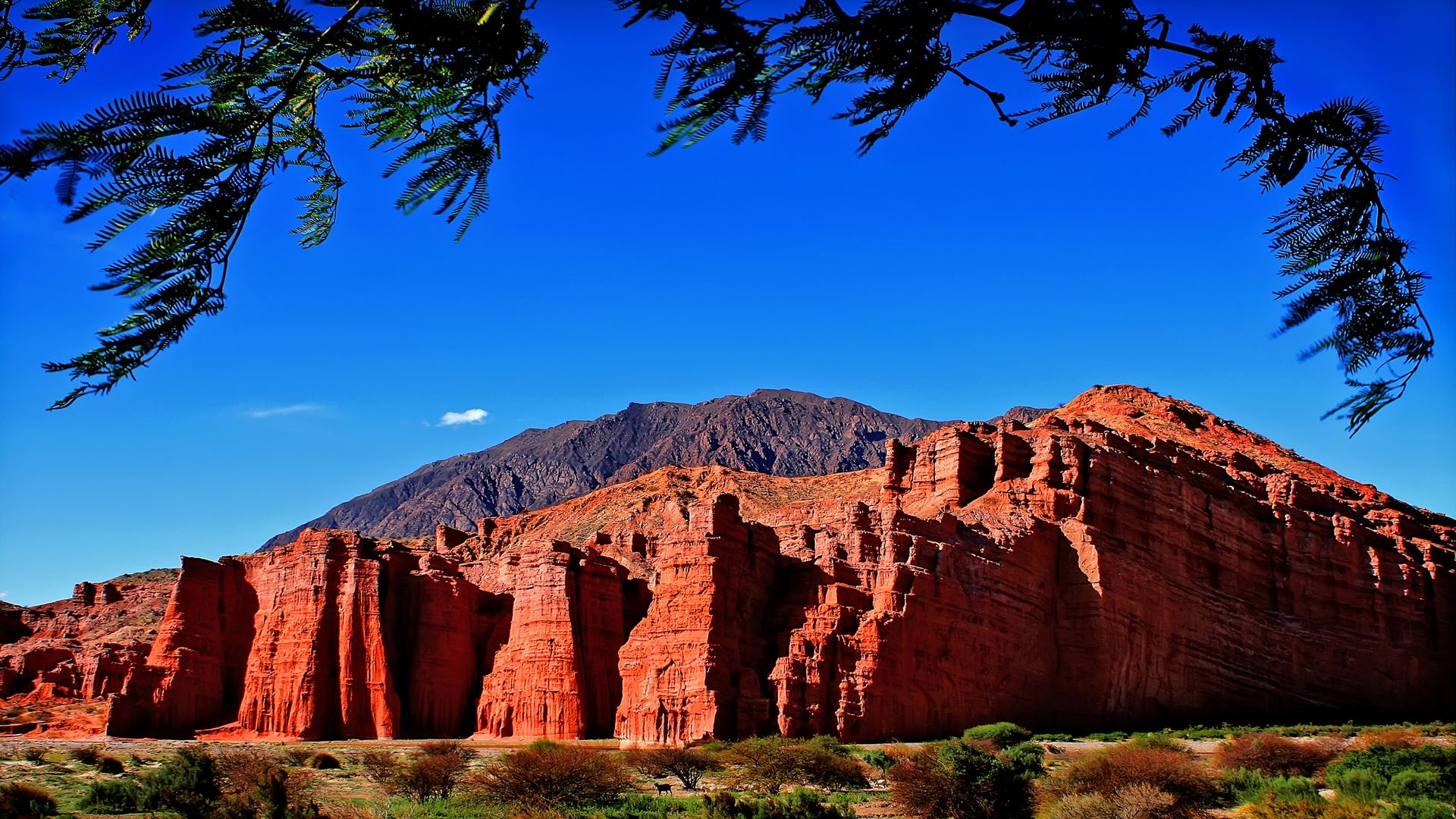 Excursion Privada A Cafayate