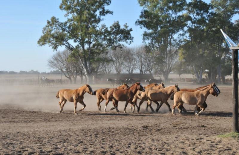 Santa Susana Ranch - Gaucho Tour