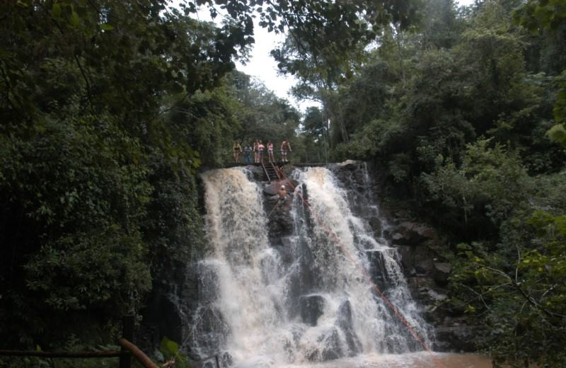 Iguazu Forest