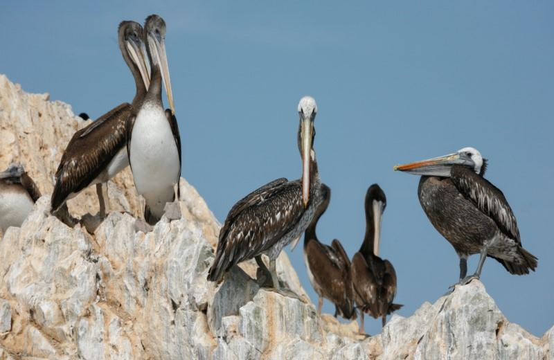 Ballestas Islands Sigthseeing tour