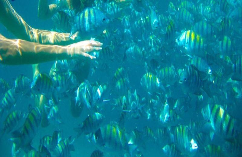 PARATY'S PARADISAC ISLANDS