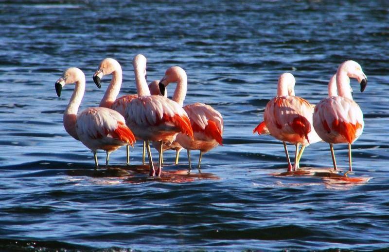 Laguna Del Toro Con Avistaje De Flamencos