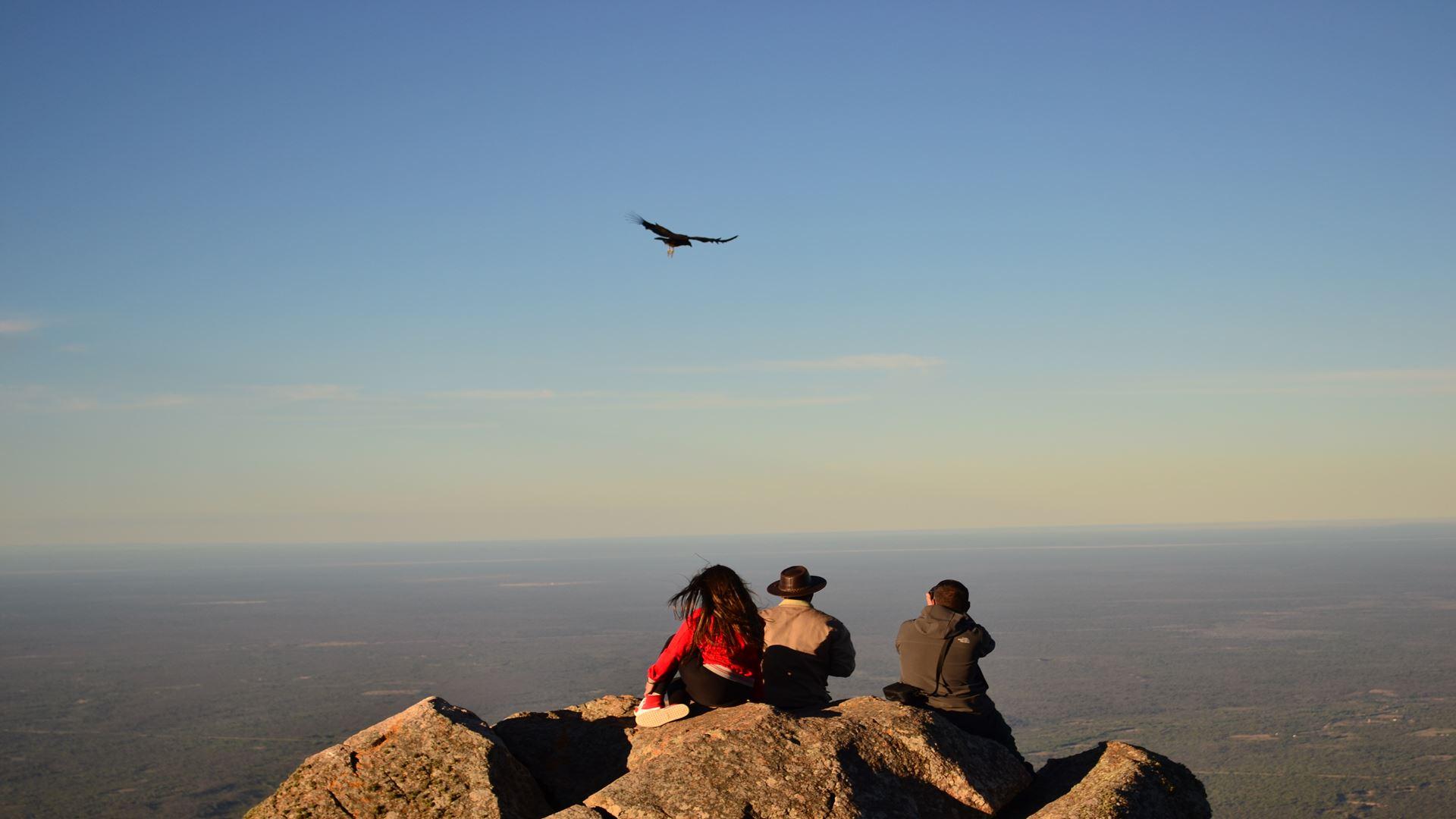 Observation de Condor à la Quebrada de los Cóndores