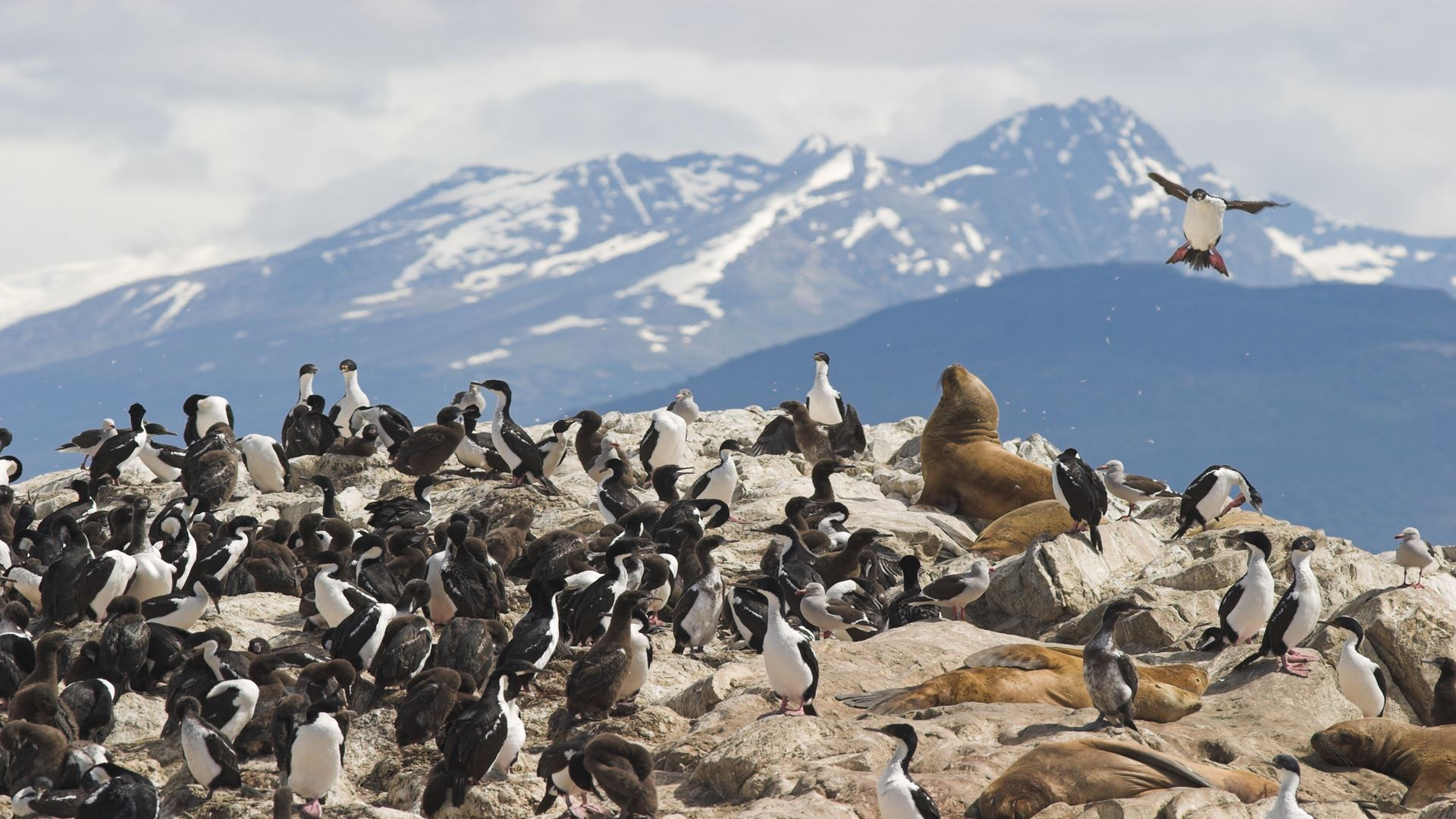 Navigation With Penguins