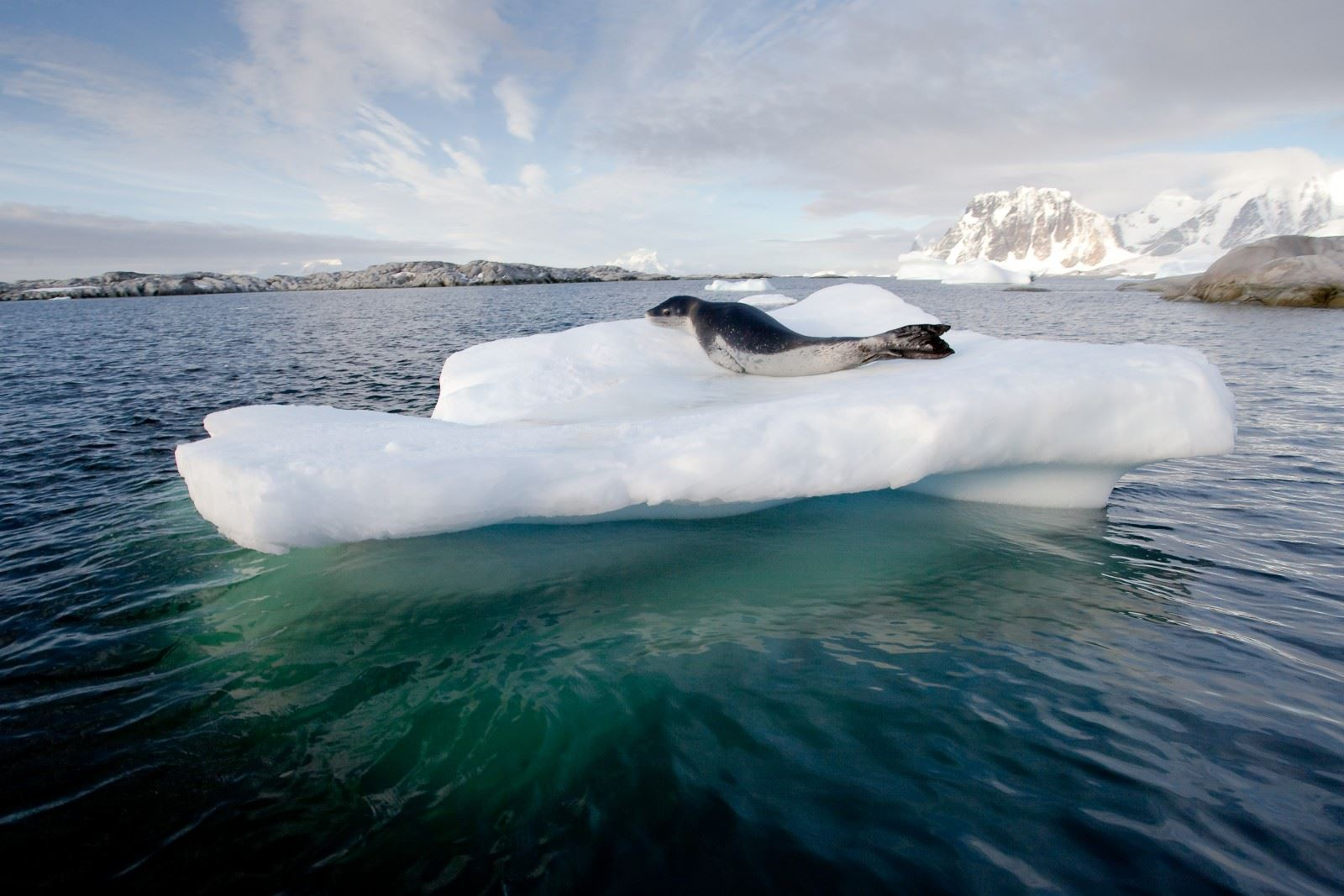 ANTARCTIC PENINSULA BASECAMP CRUISE