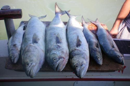 Pesca En Mar Del Plata - Pesca De Altura
