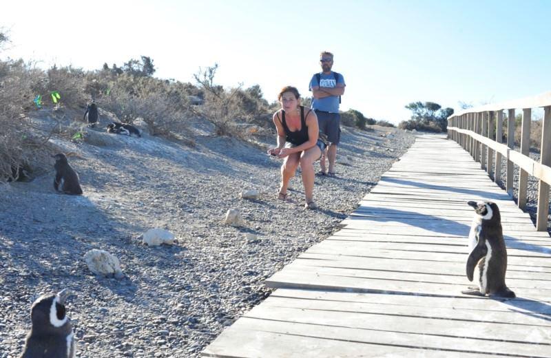 Punta Tombo Con Avistaje De Pinguinos Y Toninas