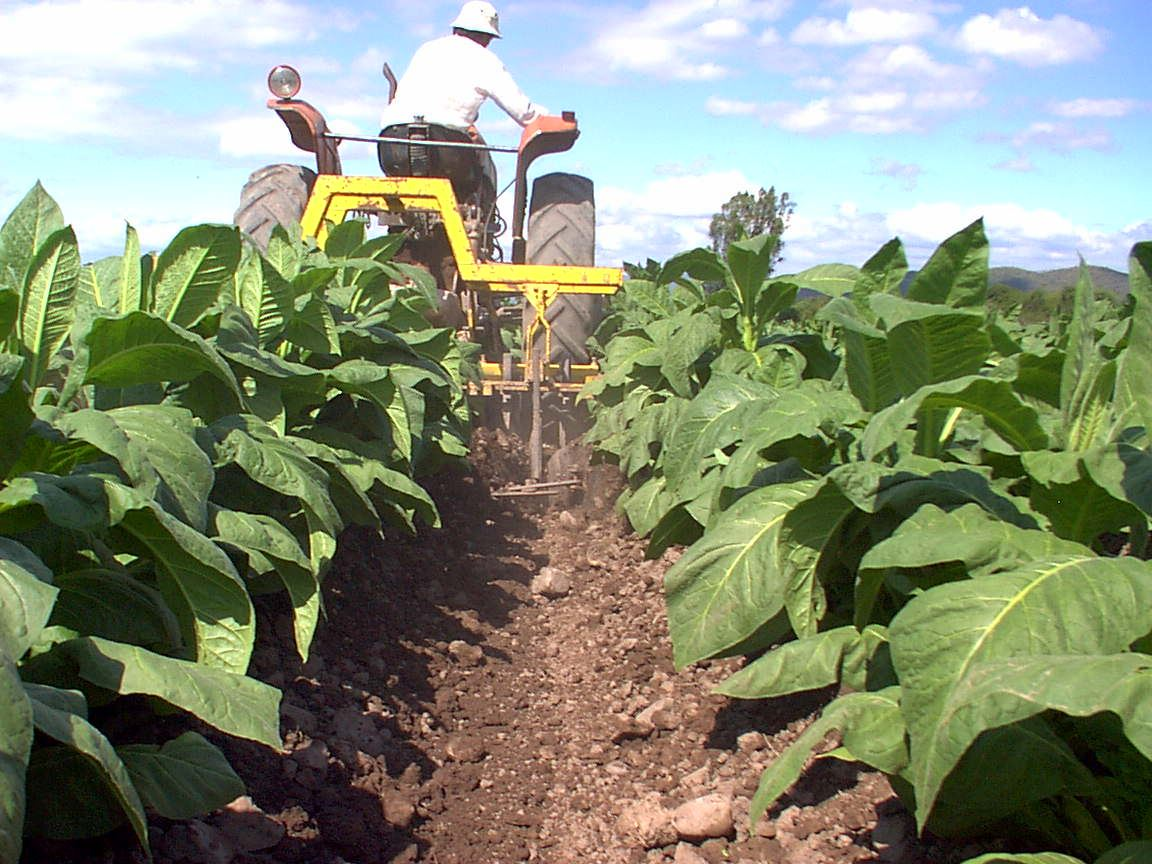 Tobacco Route