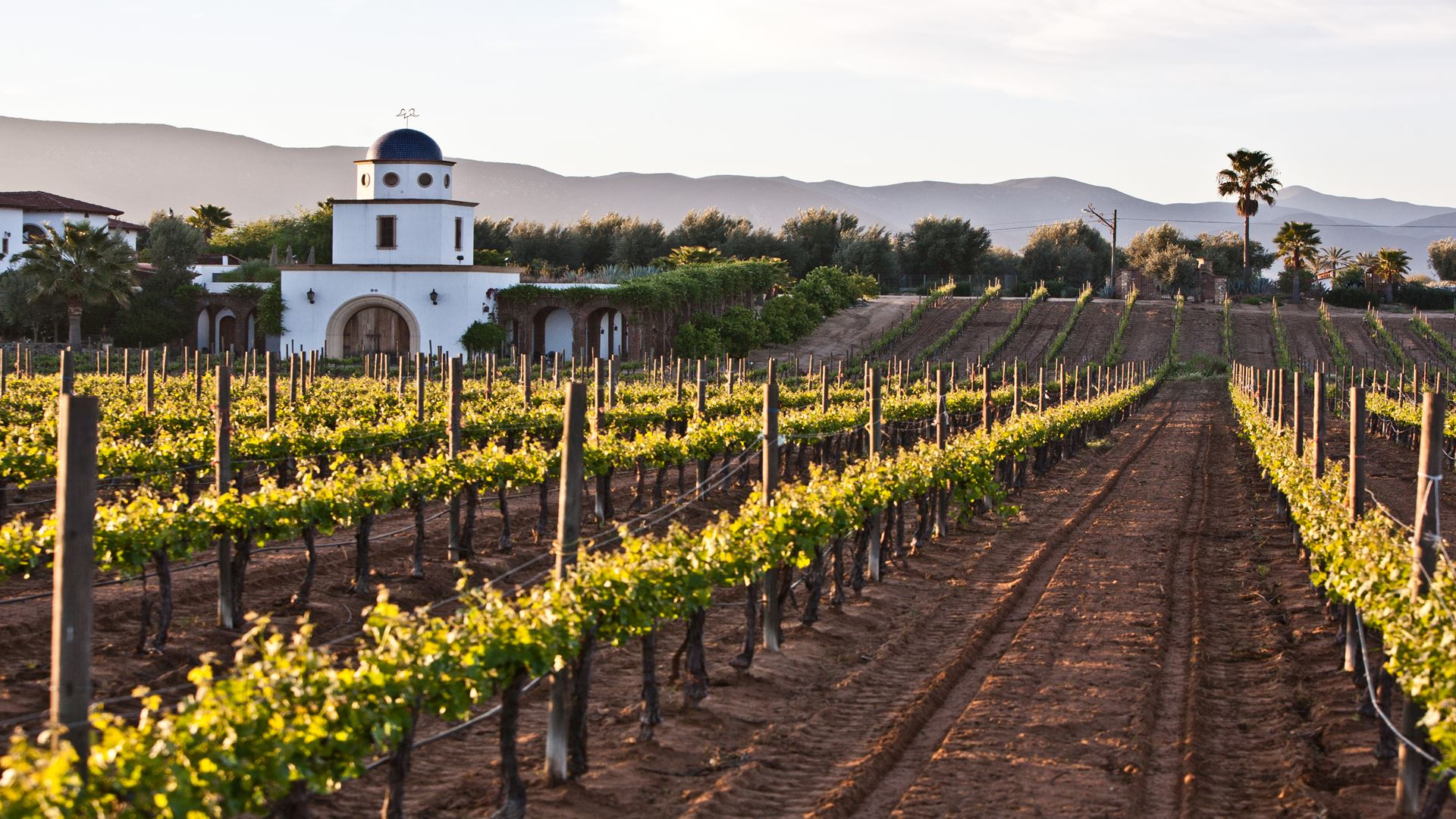 Wines Route