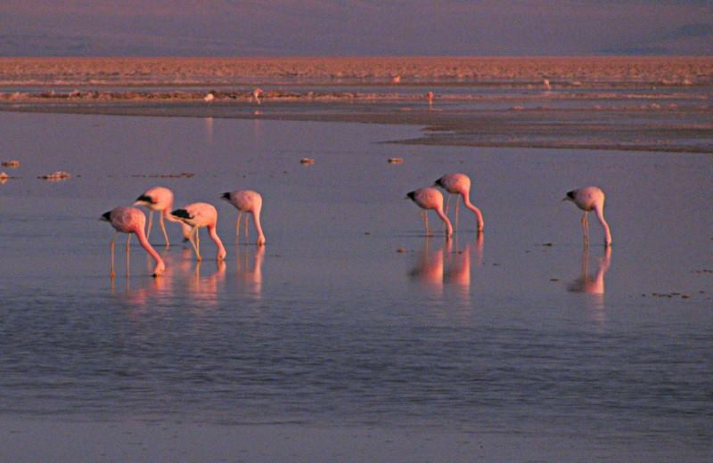 Salar De Atacama Y Lagunas Altiplanicas