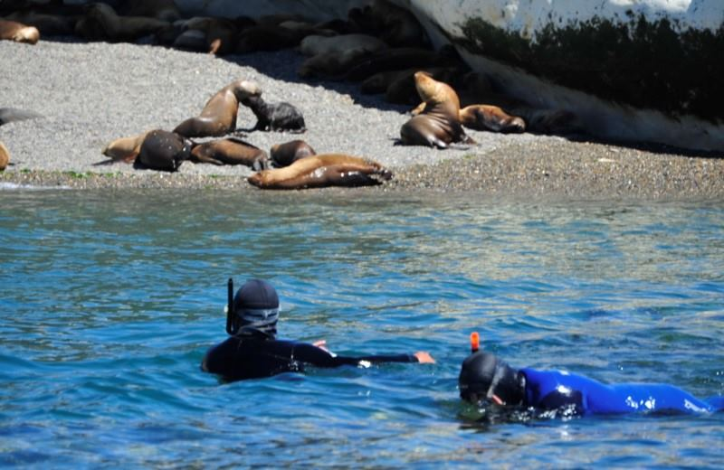 Snorkeling With Sea Lions