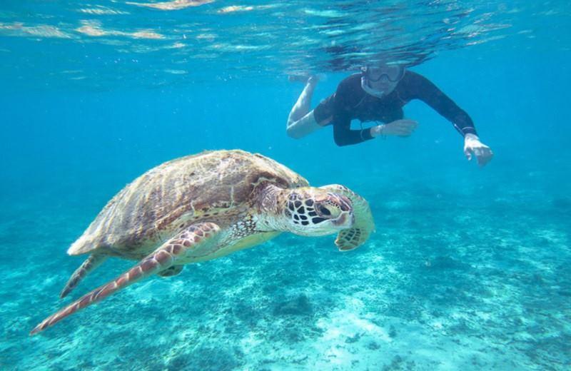 Snorkeling Con Tortugas Marinas