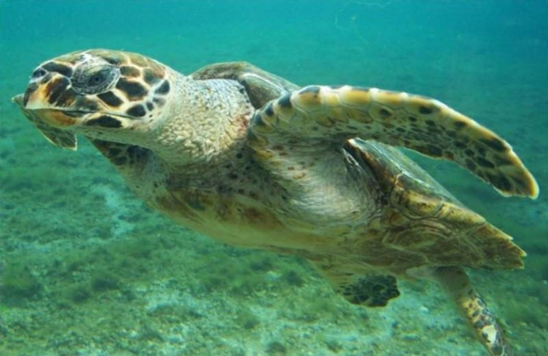 Mergulho Com Tartarugas Marinhas