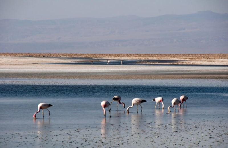 Toconao E Salar De Atacama
