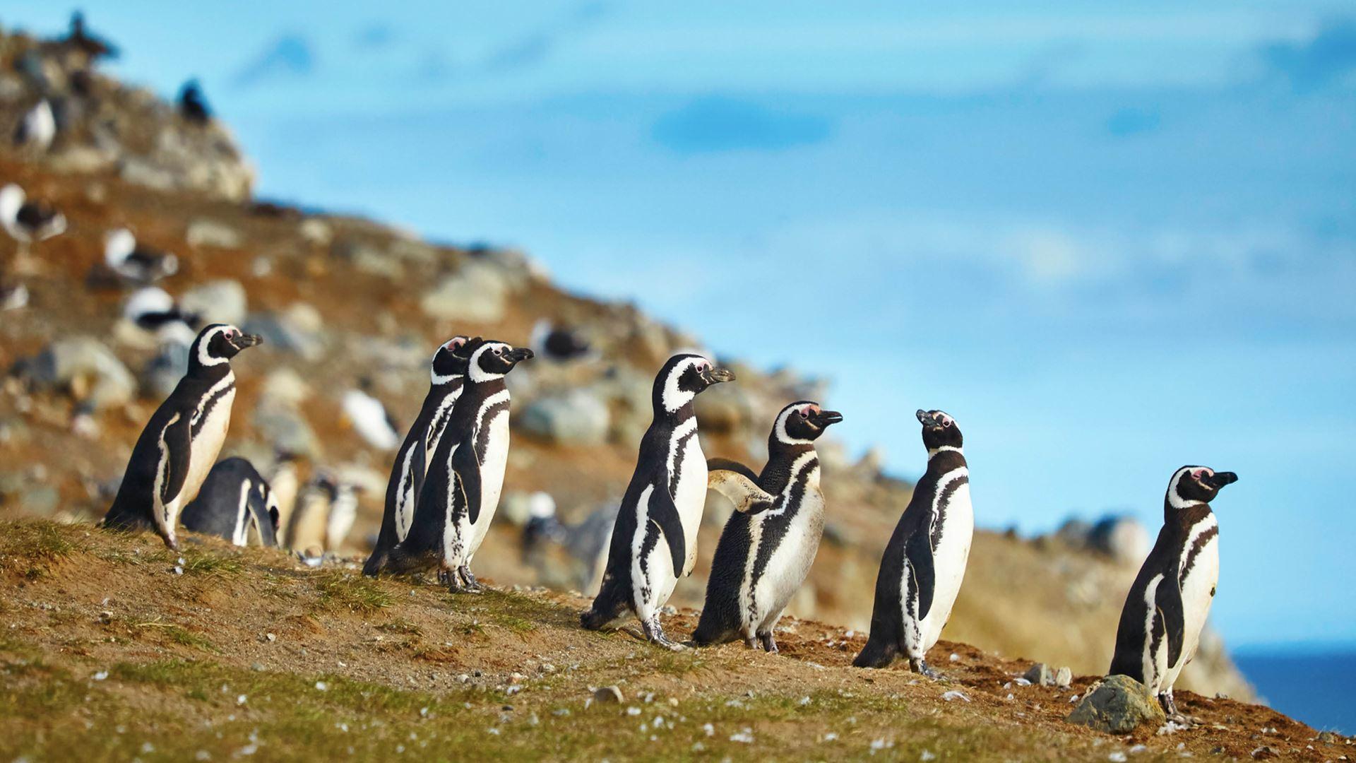 Torres del Paine y Pingüinos