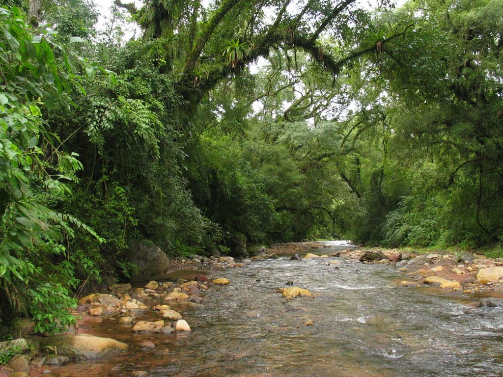 Jungle Trekking - Yungas Circuit