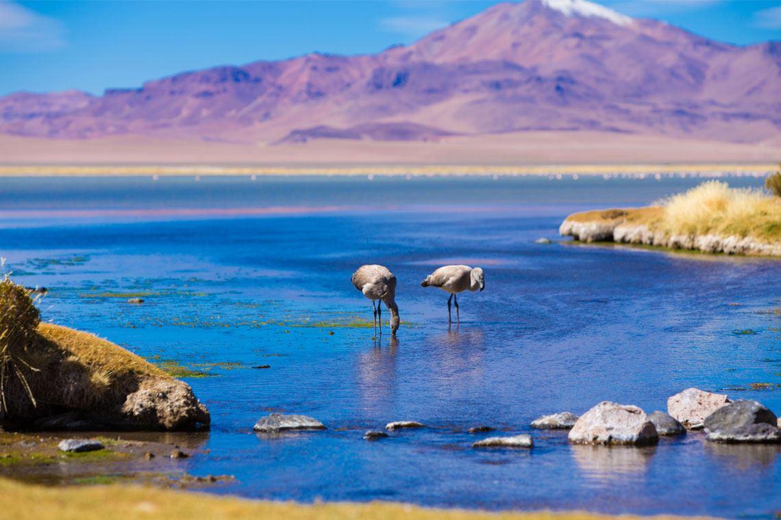 Laguna Tuyacto - Trekking Piedras Rojas Y Atardecer En Atacama