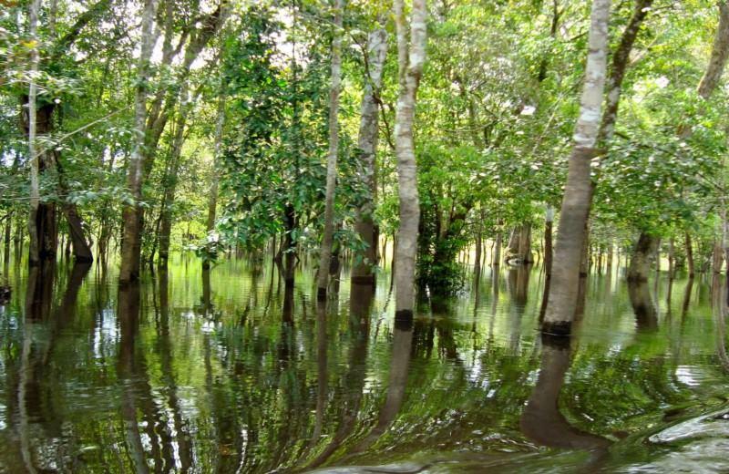 Un Día Con Delfines Del Amazonas