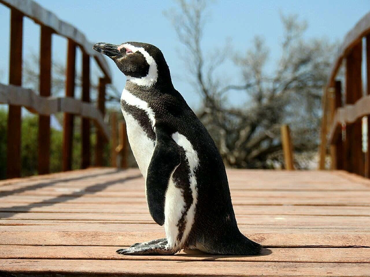 Aves que avistam na Península Valdés