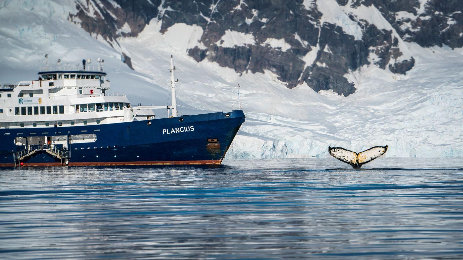 Cruzeiros para a Antártica: dicas para escolher o melhor