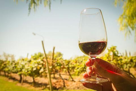 De Pura Cepa, A Rota Do Vinho